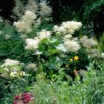 nature-in-my-garden-1403870